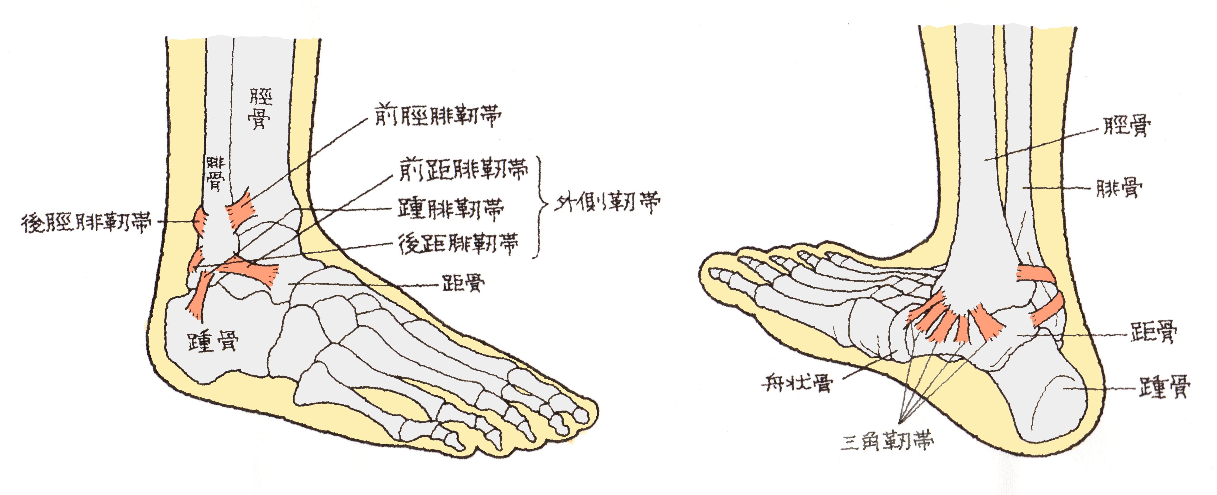 「足 関節」の画像検索結果