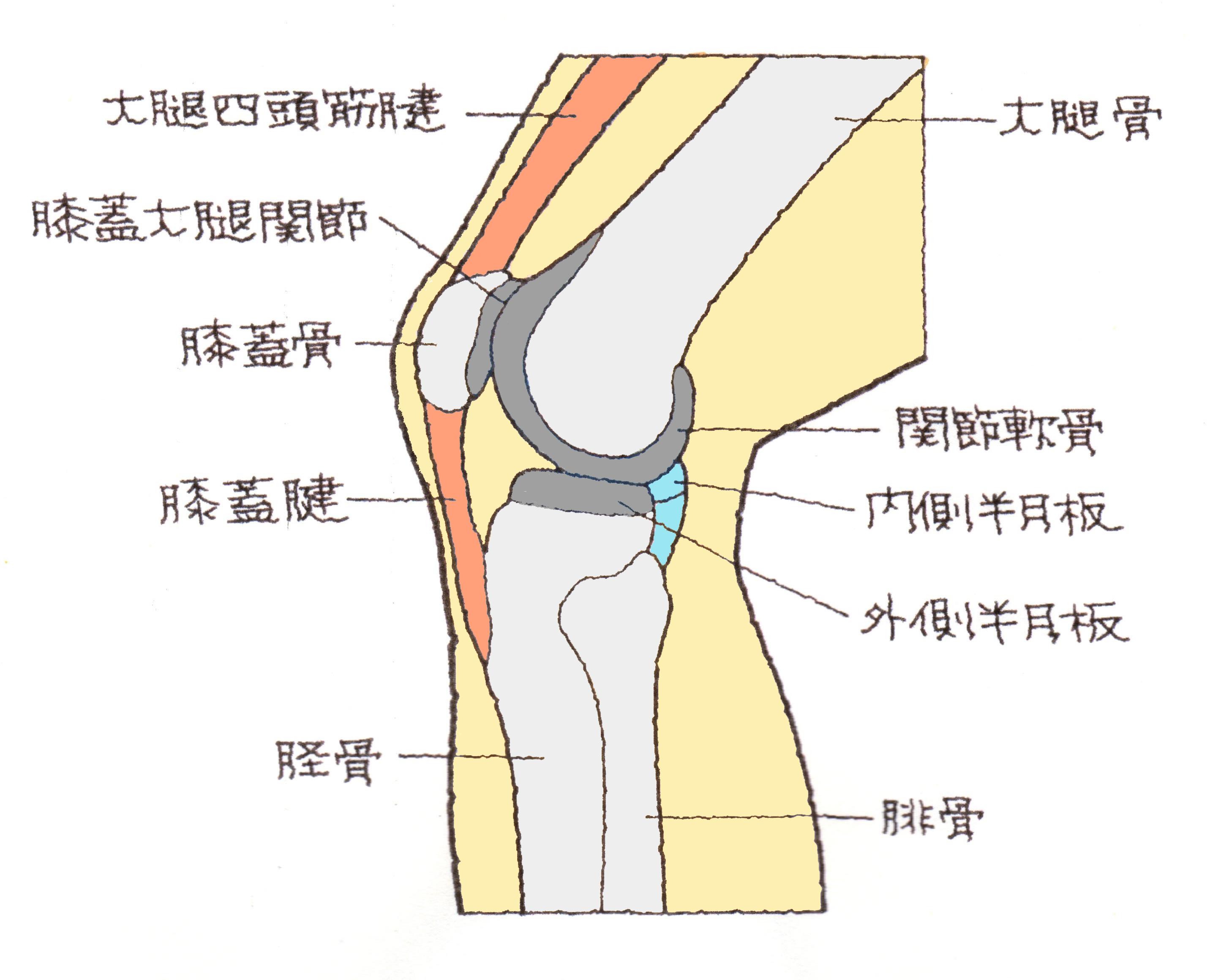 骨折 膝蓋骨
