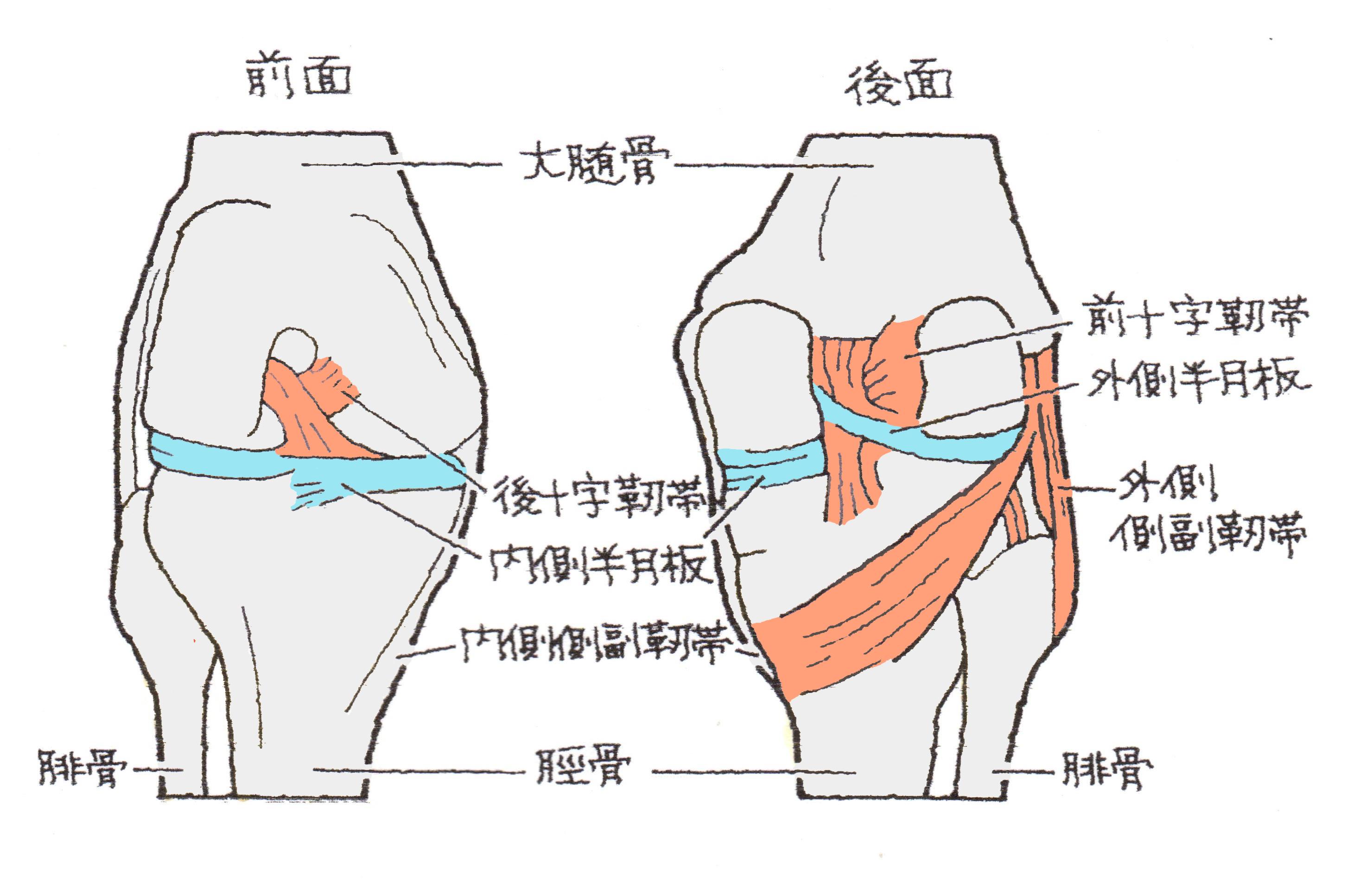 と は 損傷 靭帯
