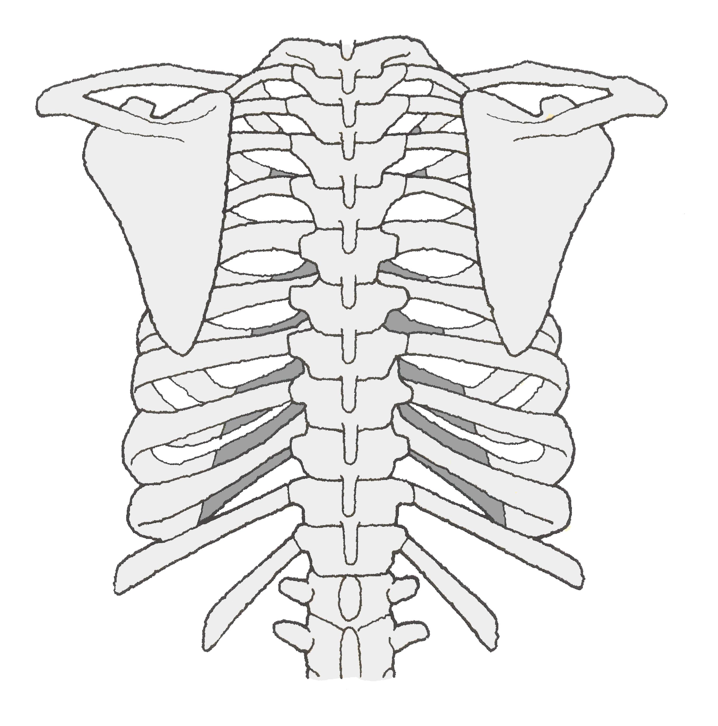 リハビリ 肋骨 骨折